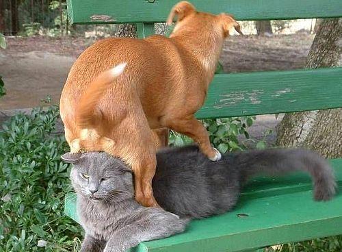「貓之樂園」的圖片搜尋結果