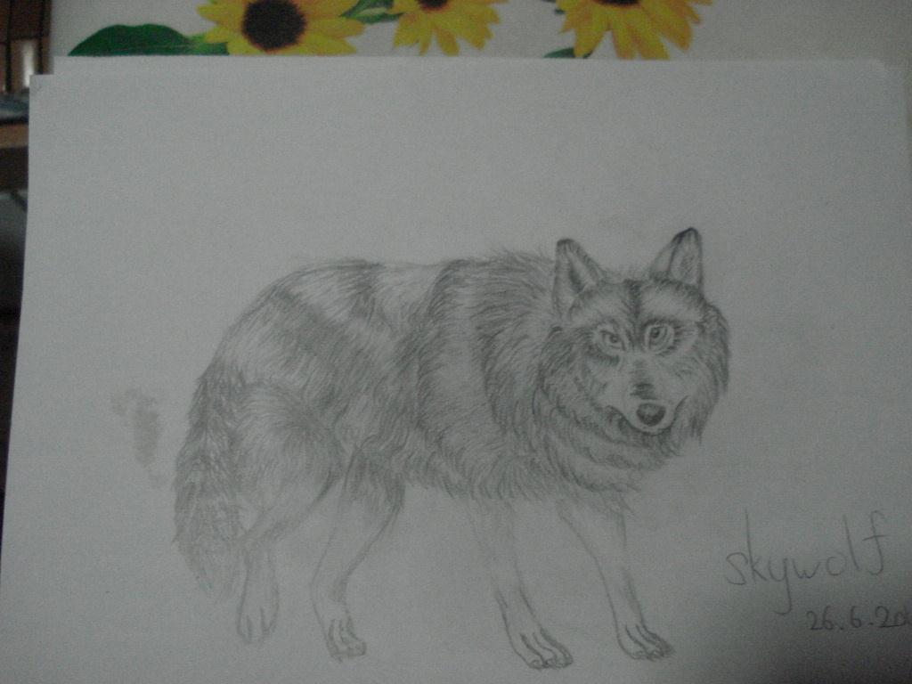 狼素描图片大全大图 狼图片大全大图 凶猛狼图片大全大图-动态狼的凶